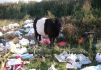Revealed: The Top Ten Excuses For Fly-Tipping